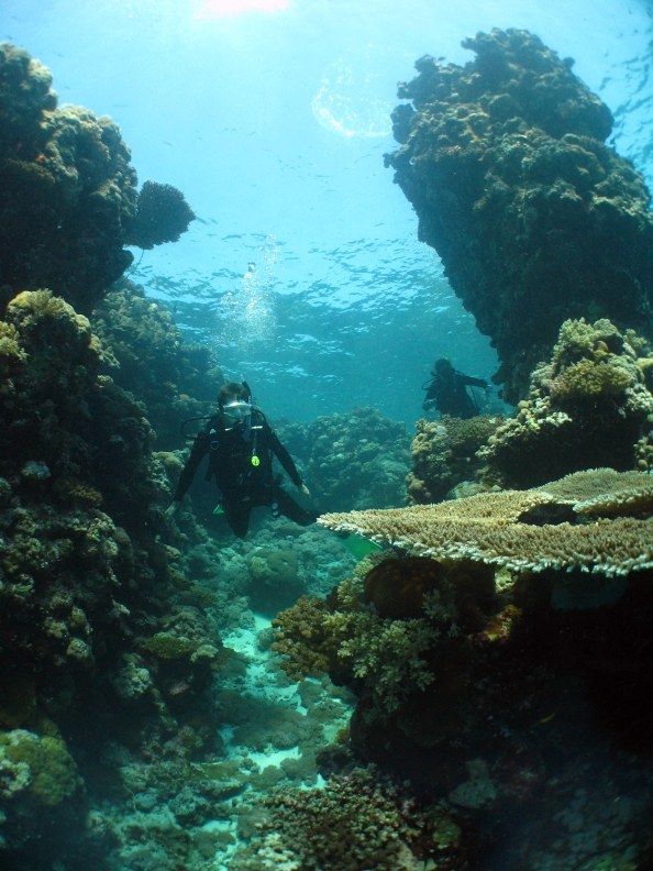 7 Diving amongst coral